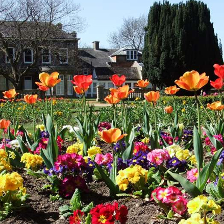 Flowers in bloom at Abbey Gardens