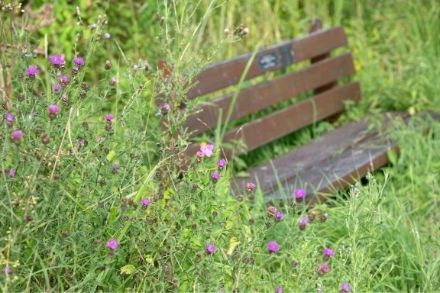 Bench amongst the flowers