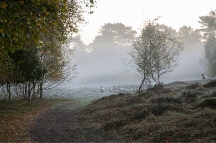 West Stow Country Park 7